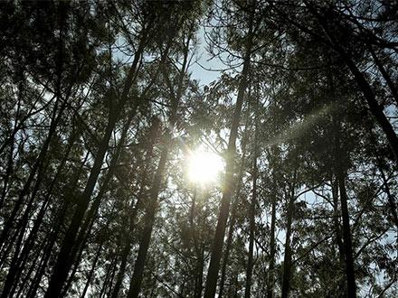 Prorrogação do Período Crítico – Sistema Nacional de Defesa da Floresta Contra Incêndios